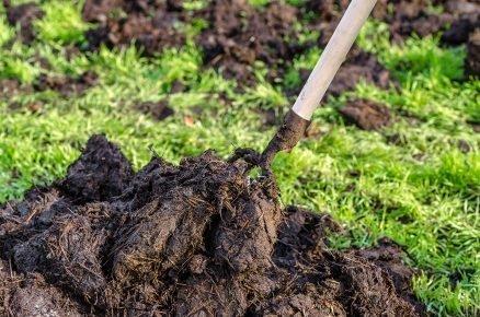 Organické hnojivo: Jak správně hnojit?
