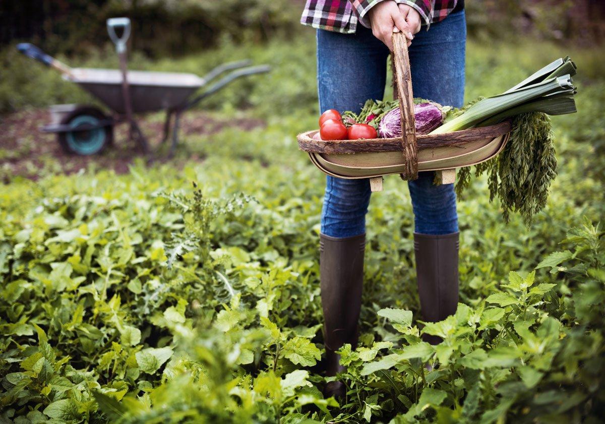Střídání plodin na záhonech: žena s košíkem zeleniny v zahradě