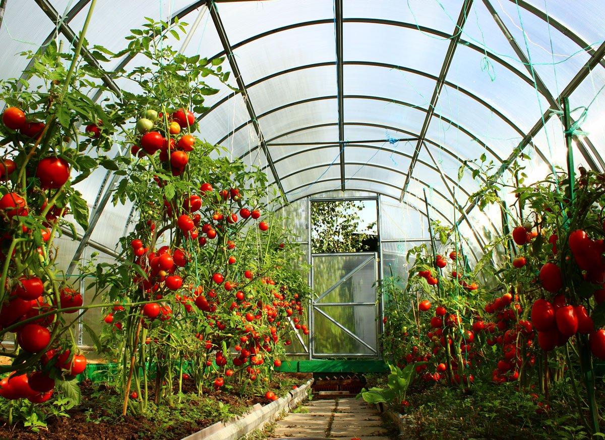 Pěstování v skleníku celoročně, kdy a co vysévat