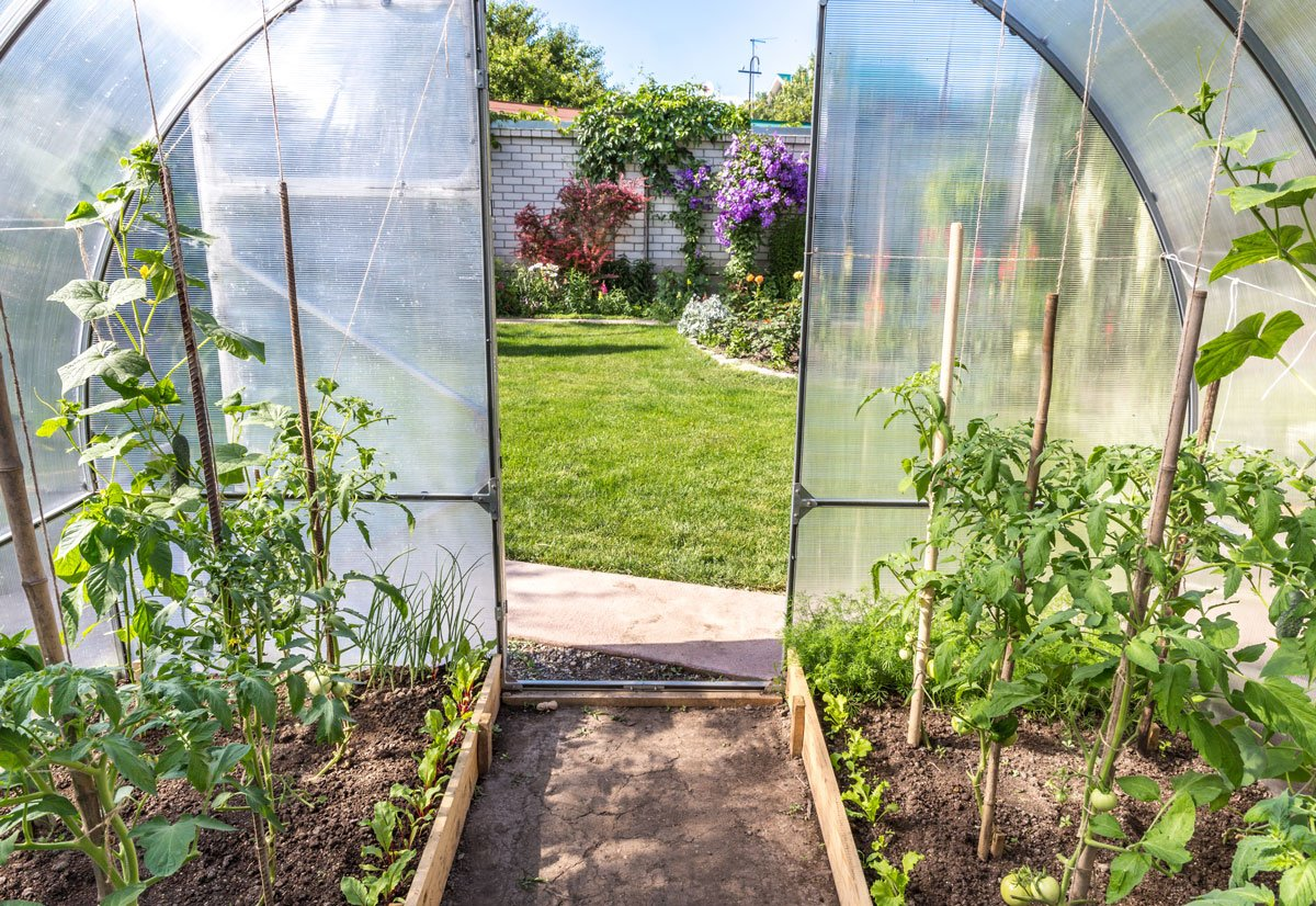 Pěstování v skleníku celoročně, co vysévat během jara a léta