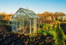 Pěstování v skleníku celoročně, co vysévat na podzim