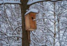 dřevěná ptačí budka na stromě
