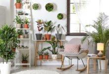 interier s pokojovými rostlinami
