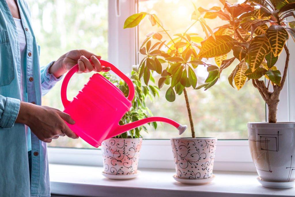 zalévání pokojových rostlin během zimy