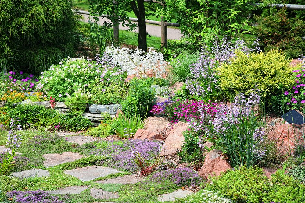 Zahrada snu