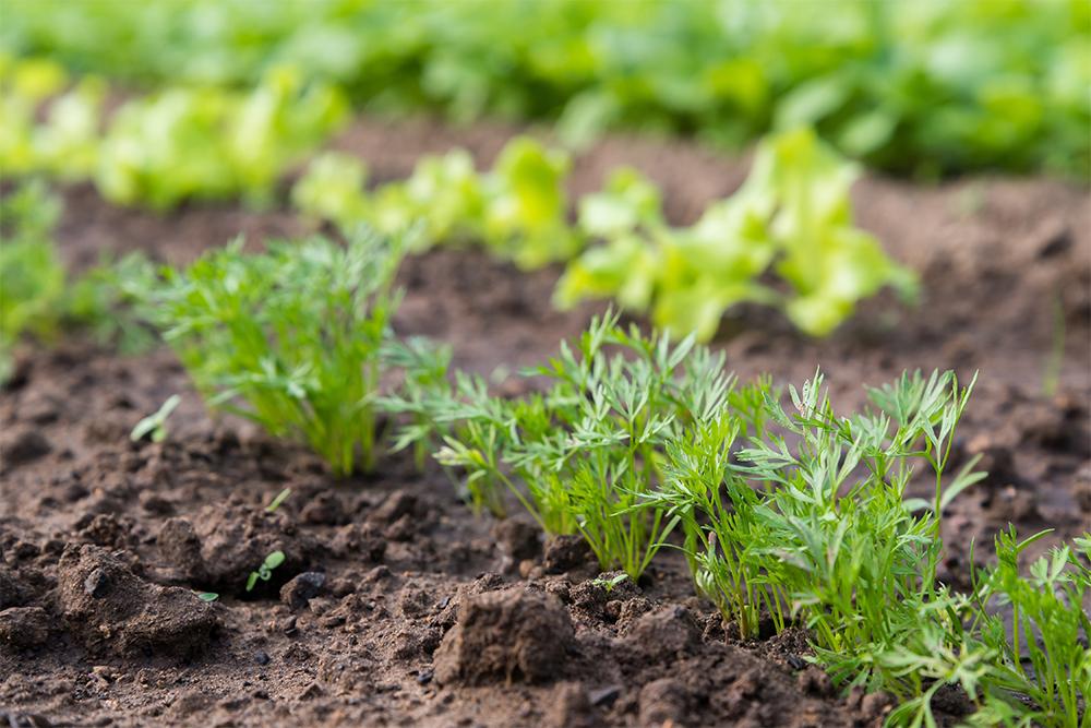 jednotení zeleniny