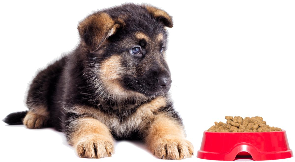 krmivo pro štěnata
