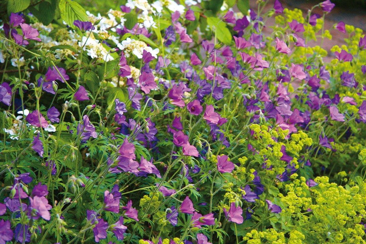 kvety v zahrade
