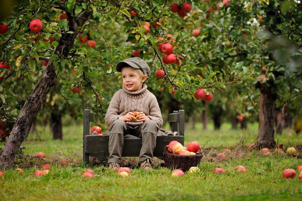 chlapec sedící v jabloňovém sadu