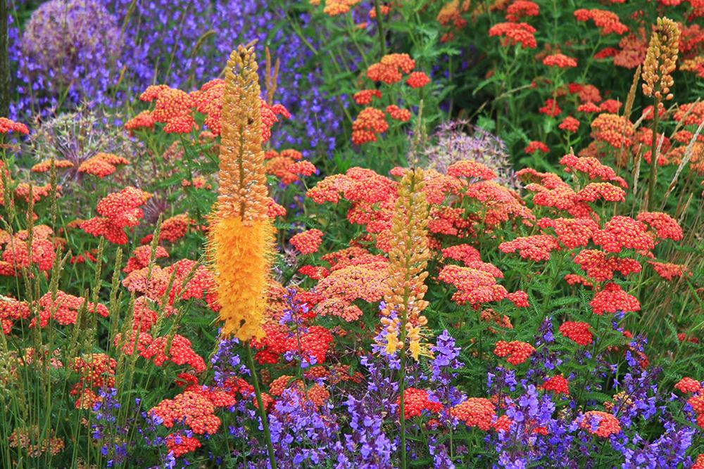 suchá zahrada
