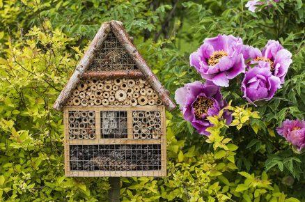 Vyrábíme hotel pro hmyz (video)