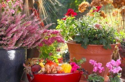 Balkon kvetoucí i na podzim