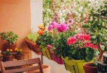 Aby balkon kvetl i na pozdim