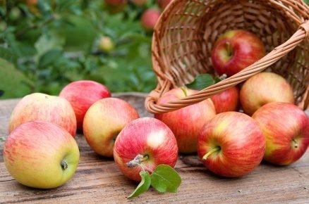 Proč jíst jablka každý den? Jaké mají účinky na náš organismus?