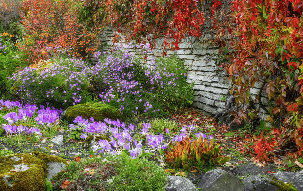 trvalky na podzim