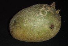 zelené brambory