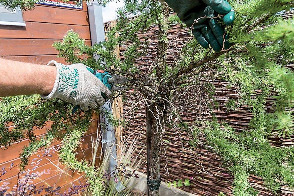 řez okrasných dřevin