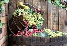 recepty na víno