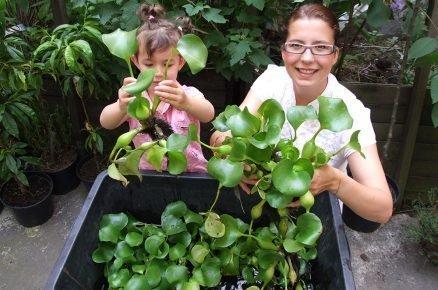 Jak udržet přes zimu vodní hyacint