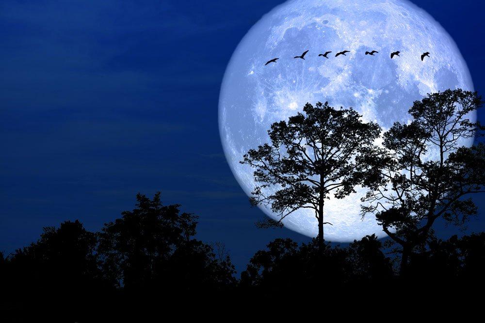 lunární kalendář, březen v zahradě