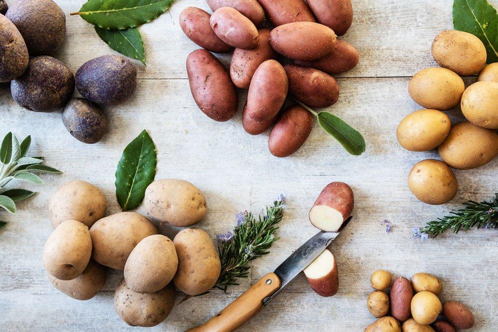 brambory, odrůdy brambor