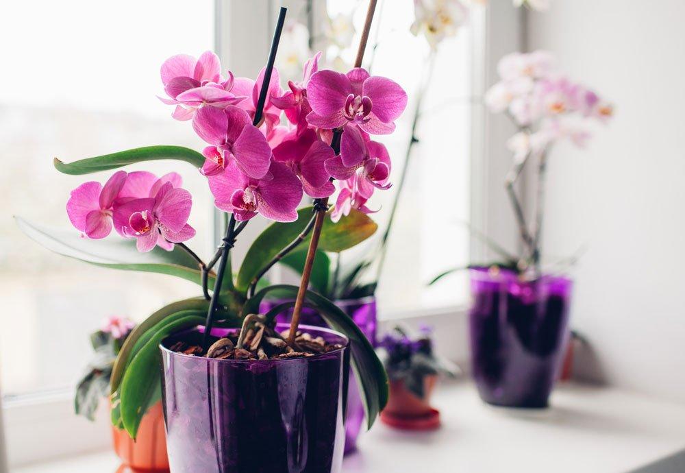 Jak se starat o orchideje aby vykvetli