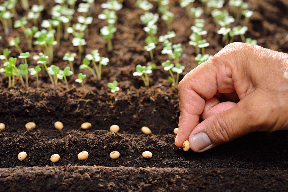 únor v zahradě, předpěstování rostlin, semínka, sazenice
