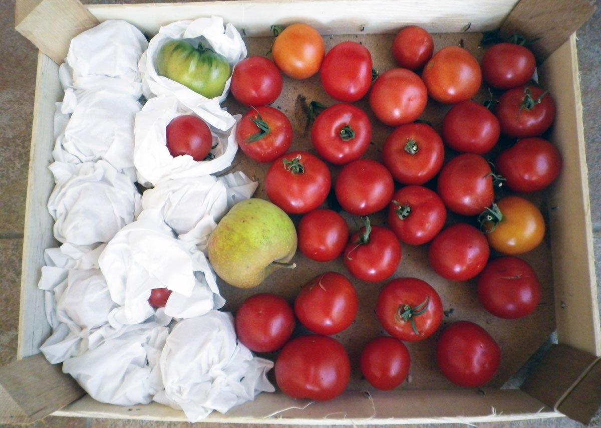 skladování zeleniny a ovoce