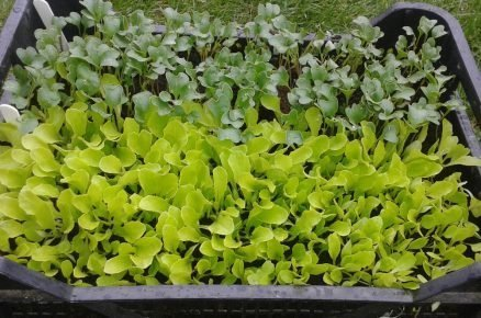 Sadba zeleniny: Pozor na padání klíčních rostlin