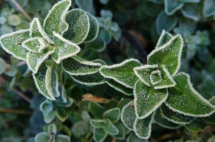 Jak se postarat o bylinky po zimě? (video)