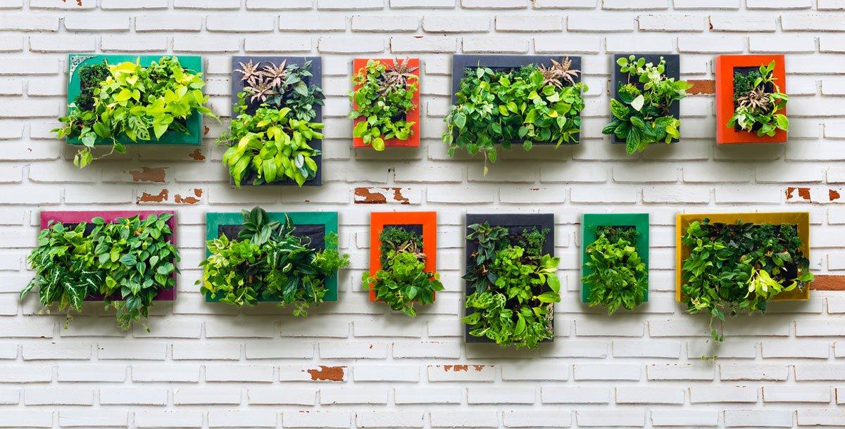 pokojové rostliny, vertikální výsadba