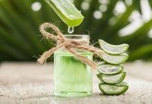 aloe vera, léčivé rostliny