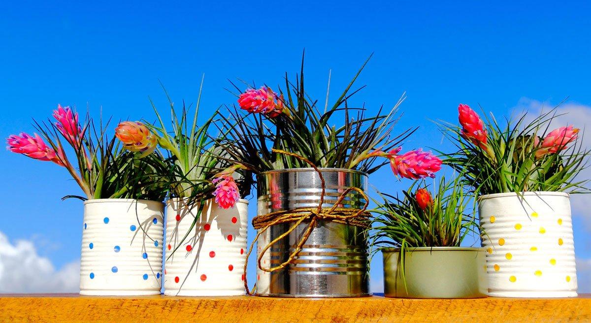 pokojové rostliny, bromélie