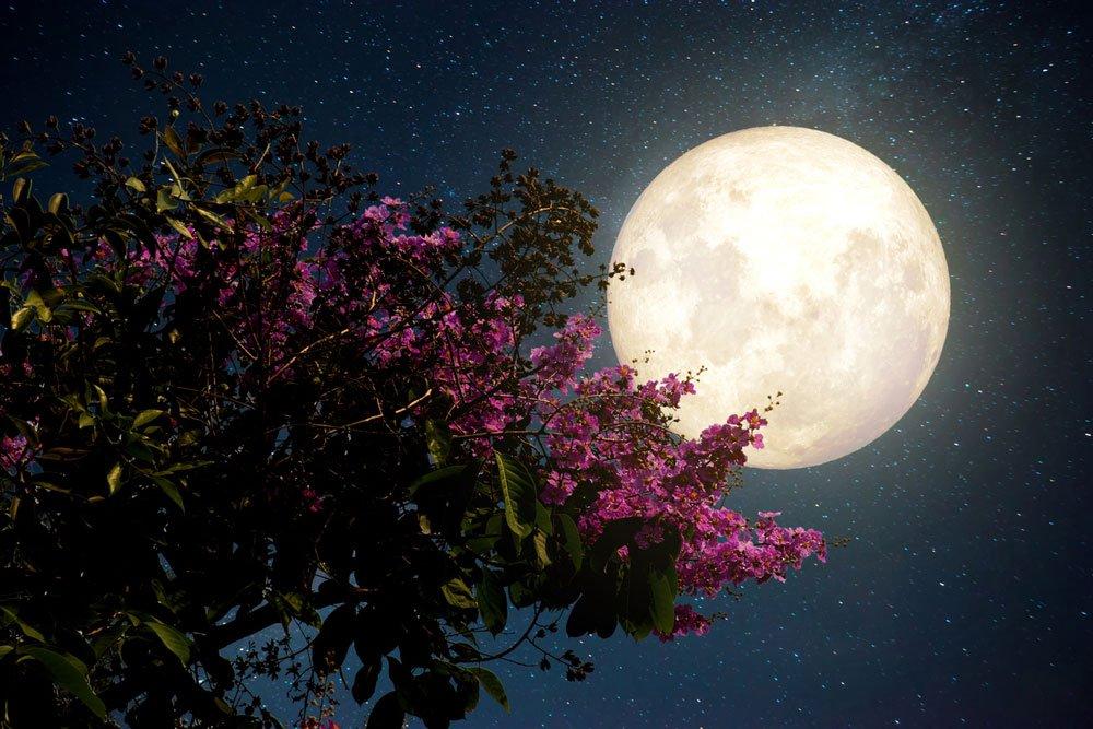 lunární kalendář, duben v zahradě