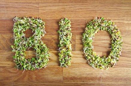 Pěstováni bez chemie! Vyzkoušejte přírodní recepty proti škůdcům