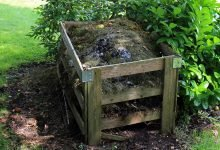 plíseň v kompostu