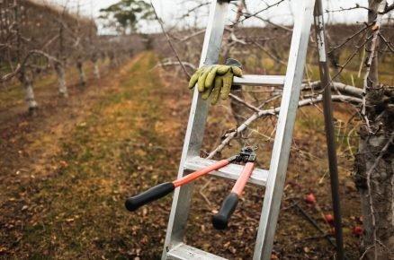 Jak na správný řez ovocných dřevin (video)