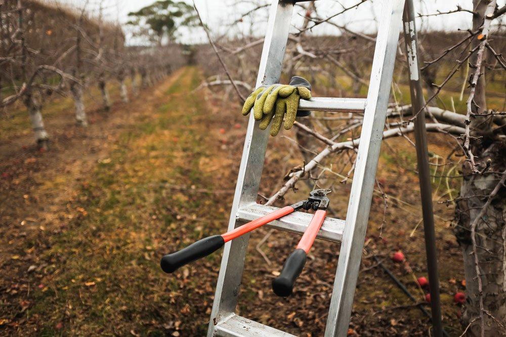 jak na řez ovocných dřevin