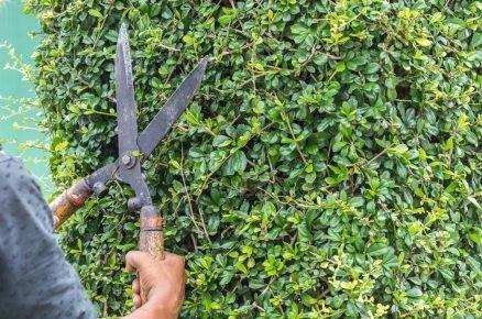 Jak se starat o zahradní nůžky