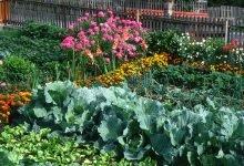 co s čím sázet: smíšené zeleninové kultury