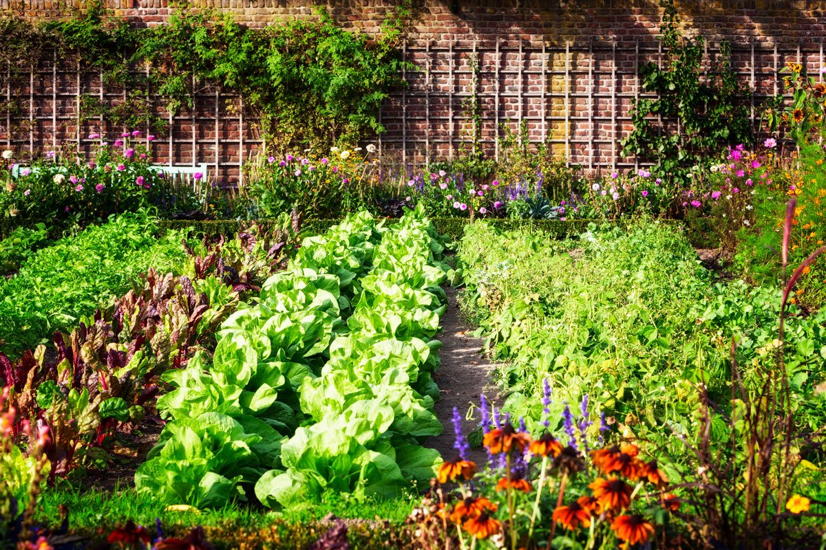 smíšené zeleninové kultury
