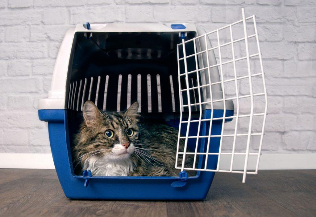 kočka v přenosce