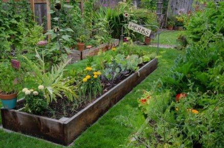 Jak na přírodní ochranu rostlin proti chorobám a škůdcům?