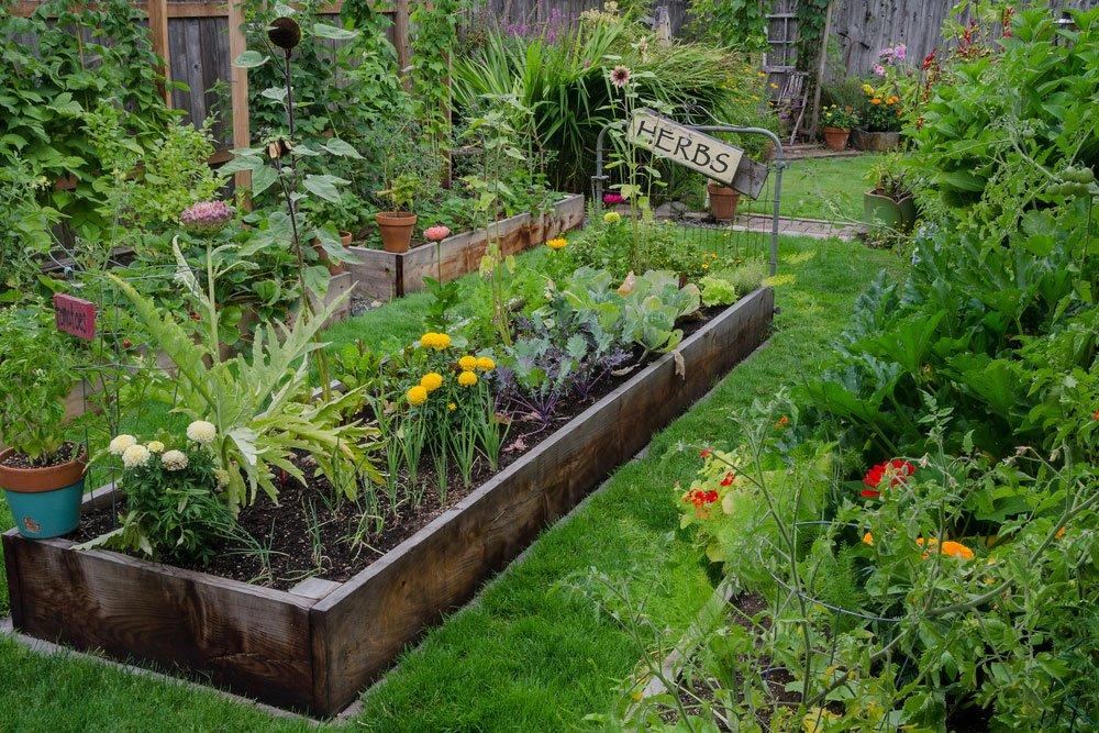 bylinky vysázené k zelenině jako ochránci rostlin proti škůdcům v zahradě