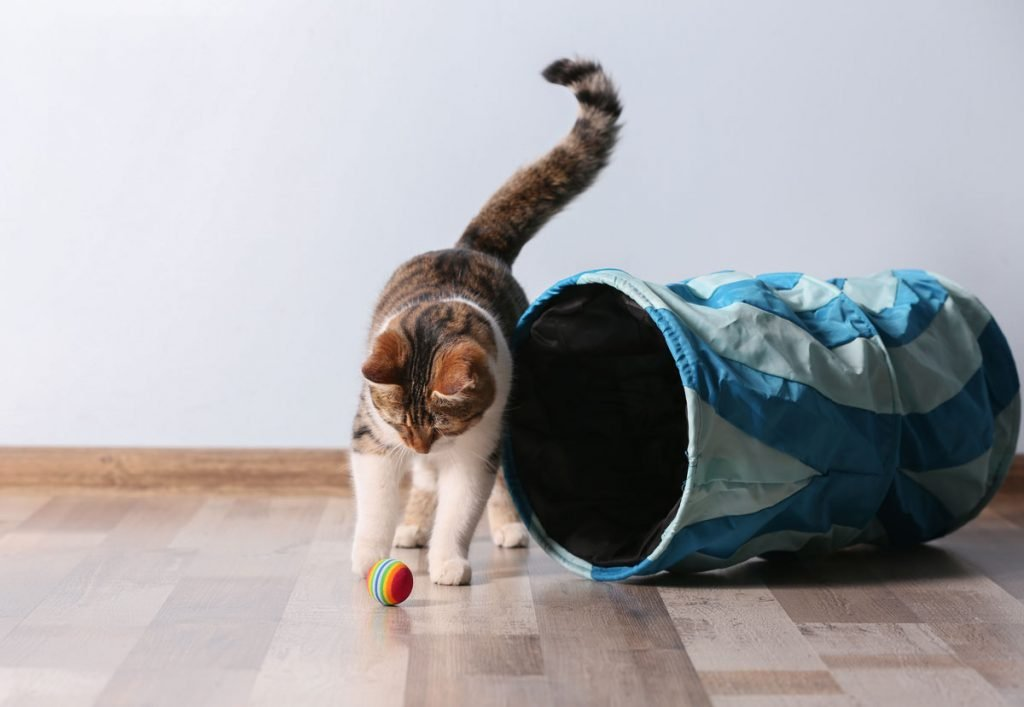 hrajíci se kočka vedle tunele