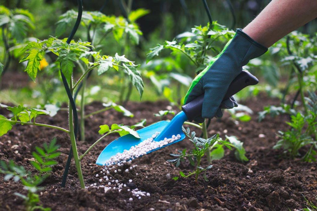 hnojení granulovaným hnojivem