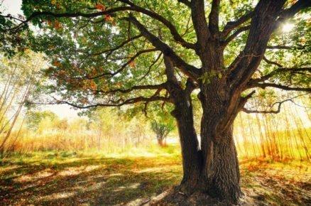 Když se trávniku pod stromy nedaří. Jaké jsou možnosti?
