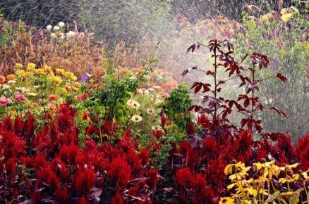 10 kvetoucích trvalek, které na zahradě nesmí chybět