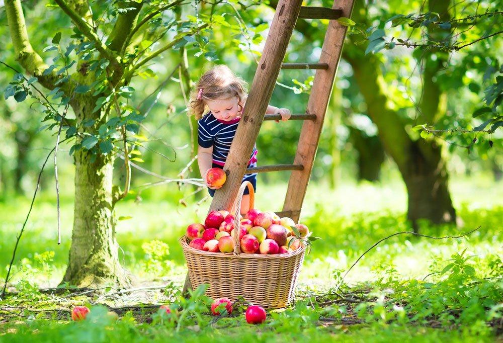 malá dívka sbírá jablka