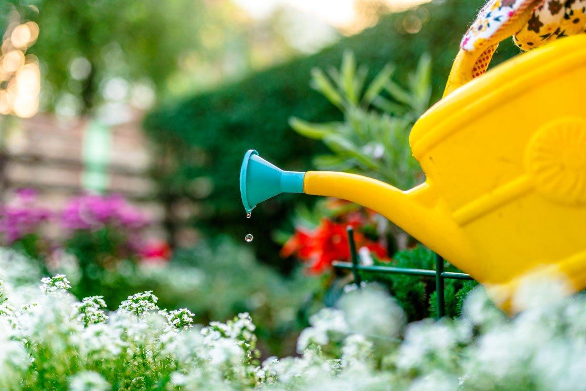 polévání zahrady